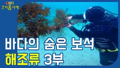제주로 혼저옵서예 바다의 숨은 보석, 해조류 3부